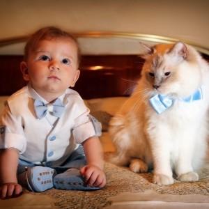 gatti ragdoll con i bambini