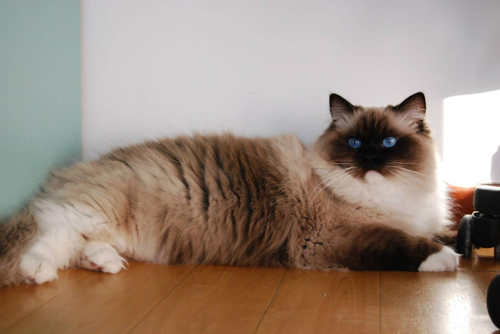 cat in japan game